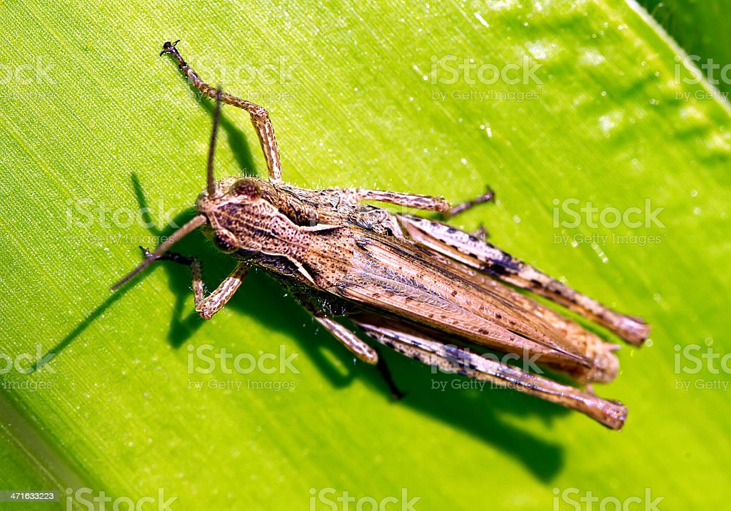 insect on the leaf royalty-free stock photo
