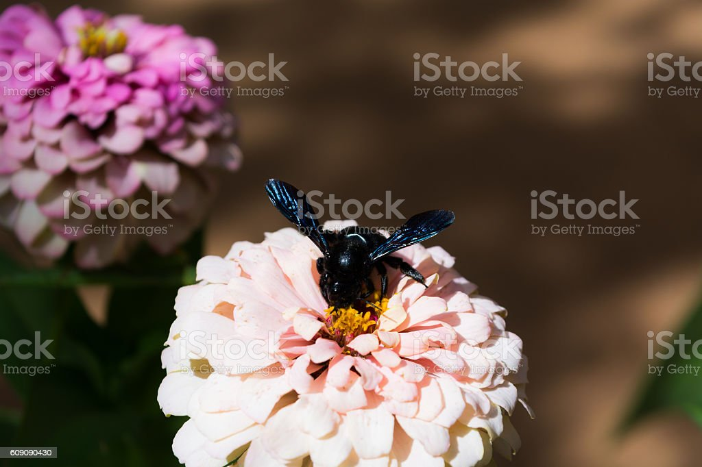 insect perched on a flower stock photo