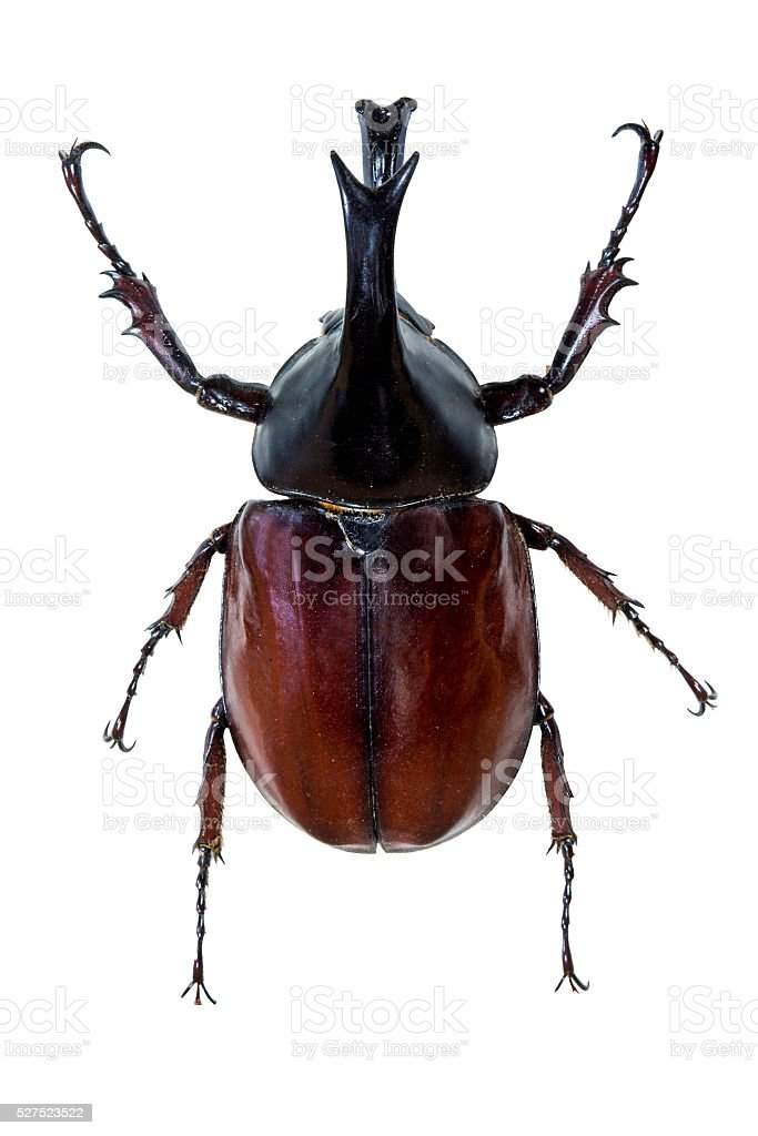 Insect stock photo