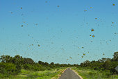 Insect Swarm