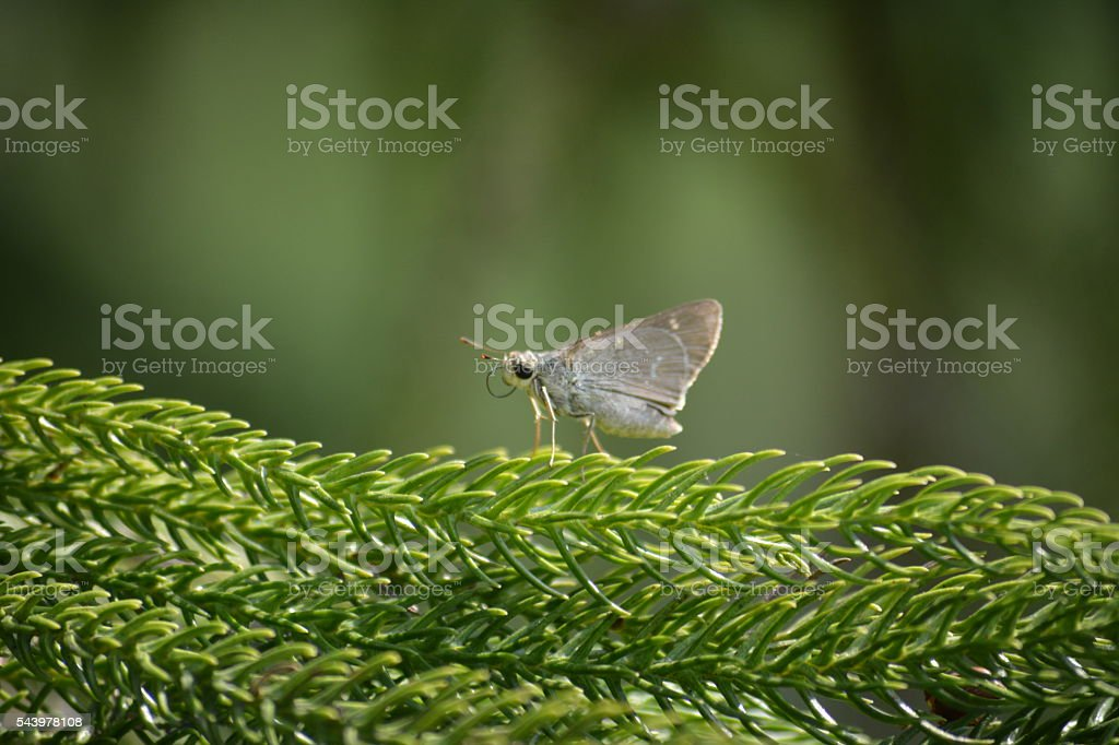 Insect with it's fevorite colour green stock photo