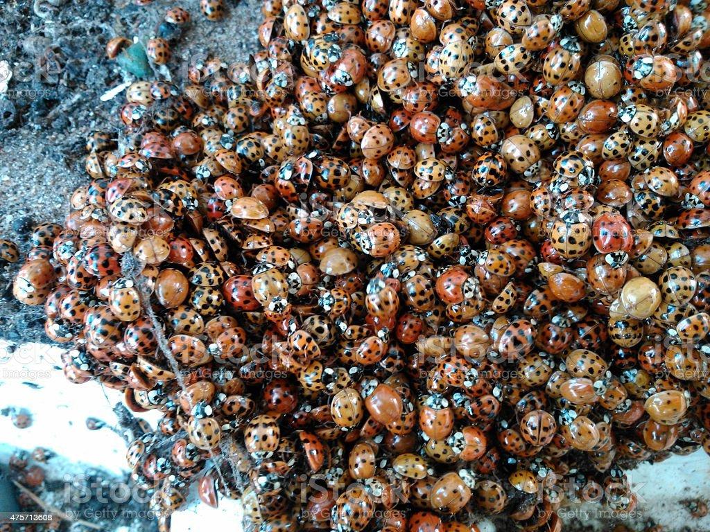 insecto foto de stock libre de derechos