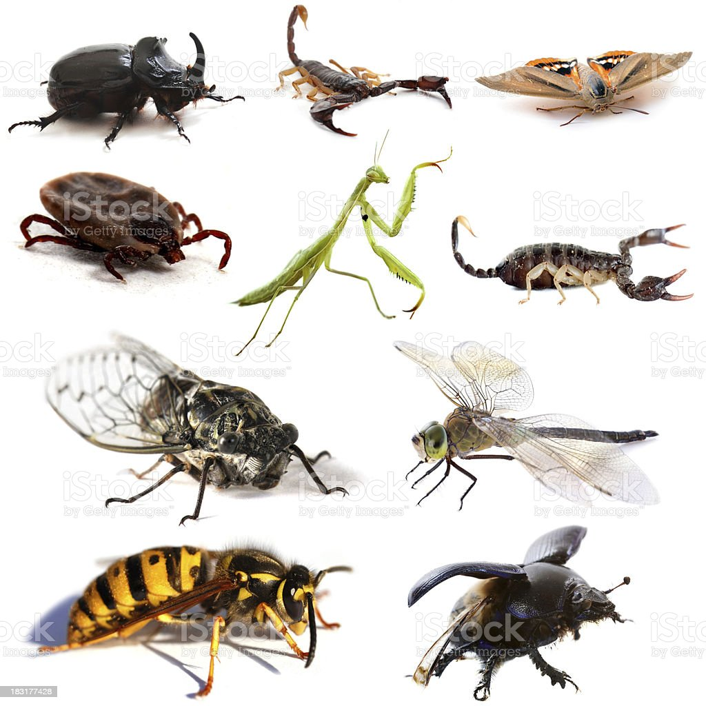insects and scorpions stock photo