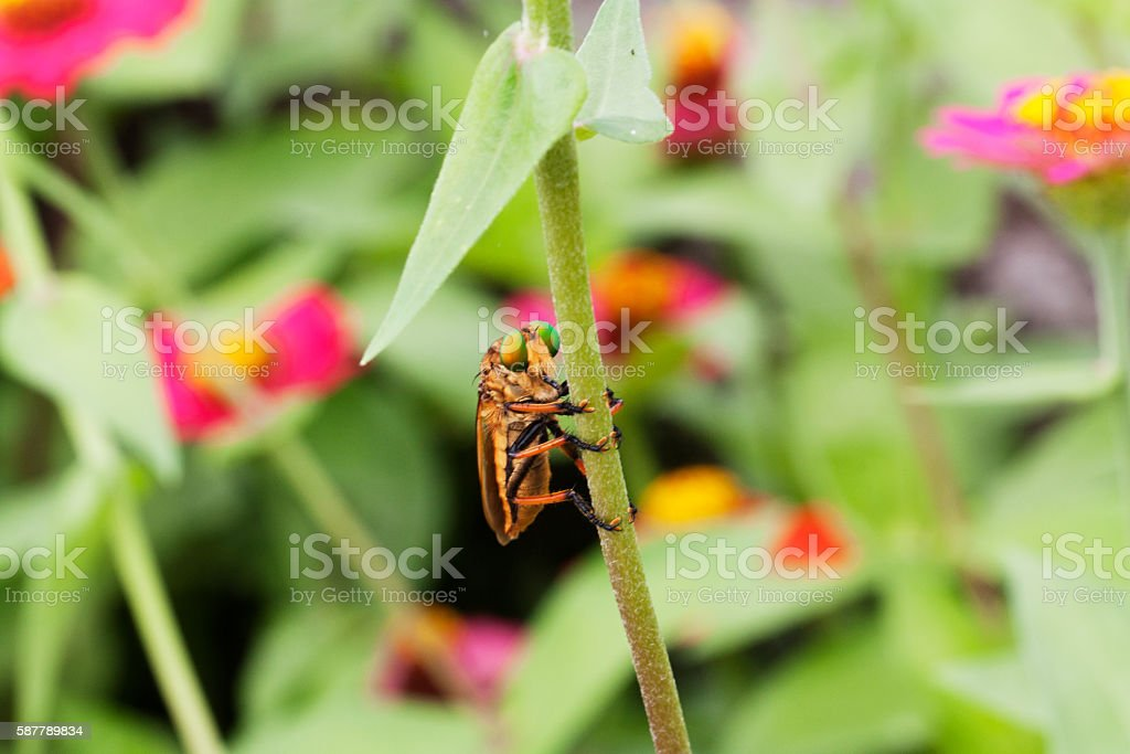Insects desperately grab stock photo