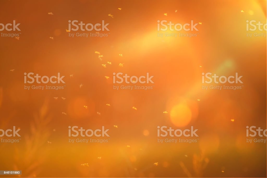 Insects fly in the air at shallow depth of field stock photo