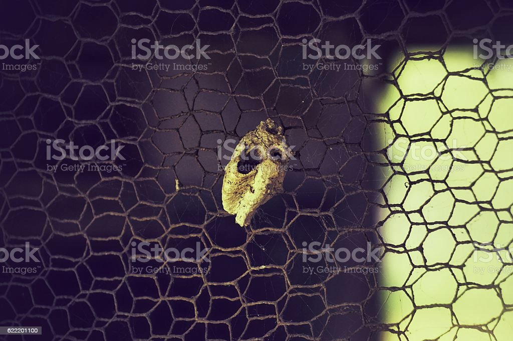 Insects net royalty-free stock photo