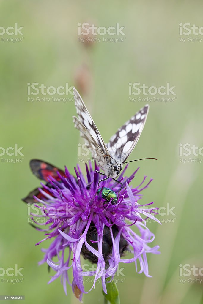 Insects on a flower. royalty-free stock photo