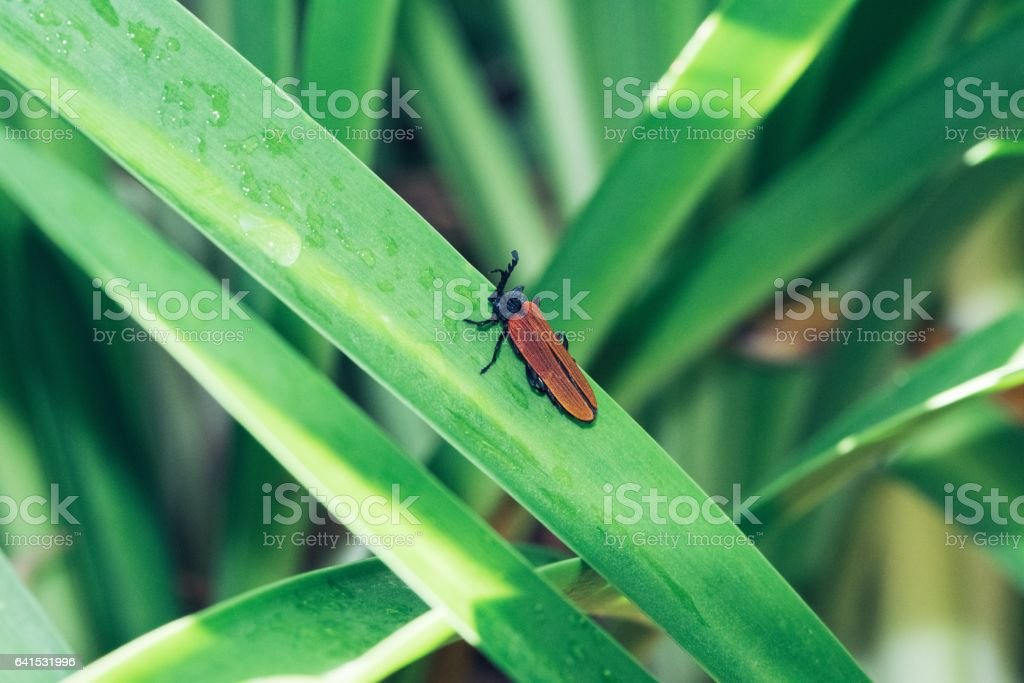 Insects on leaves stock photo