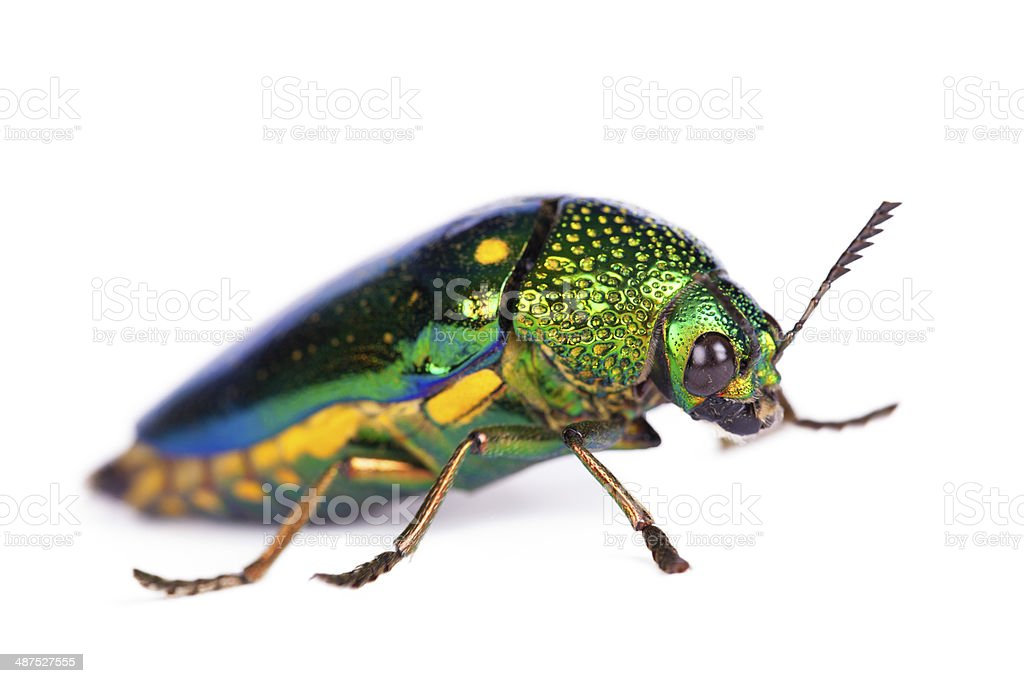 Insects over white background. royalty-free stock photo
