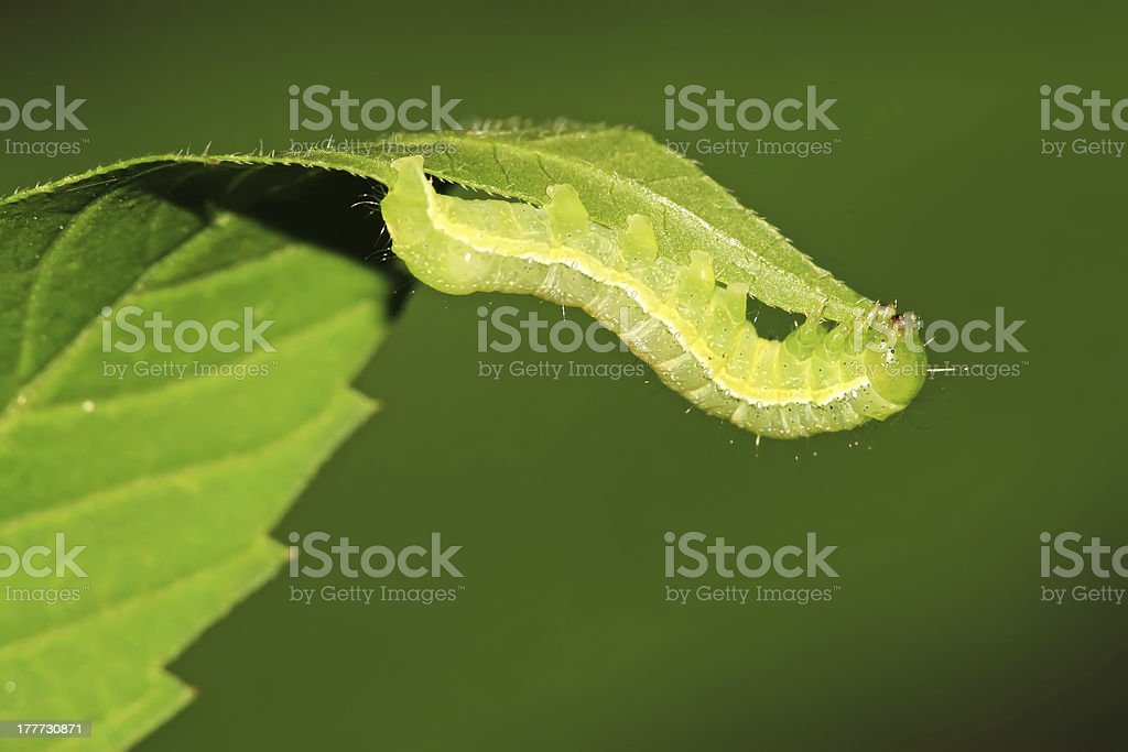 insects stock photo