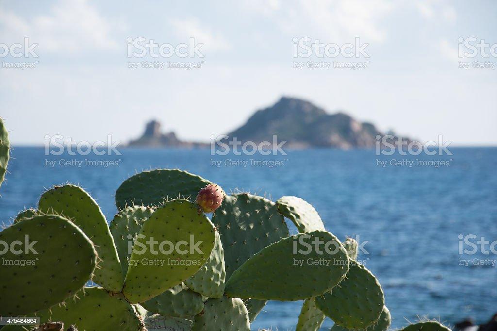 Insel mit Kaktus royalty-free stock photo