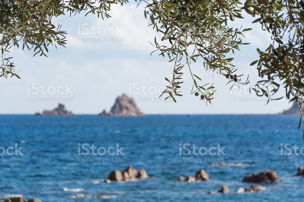 Insel mit Olivenbaum royalty-free stock photo