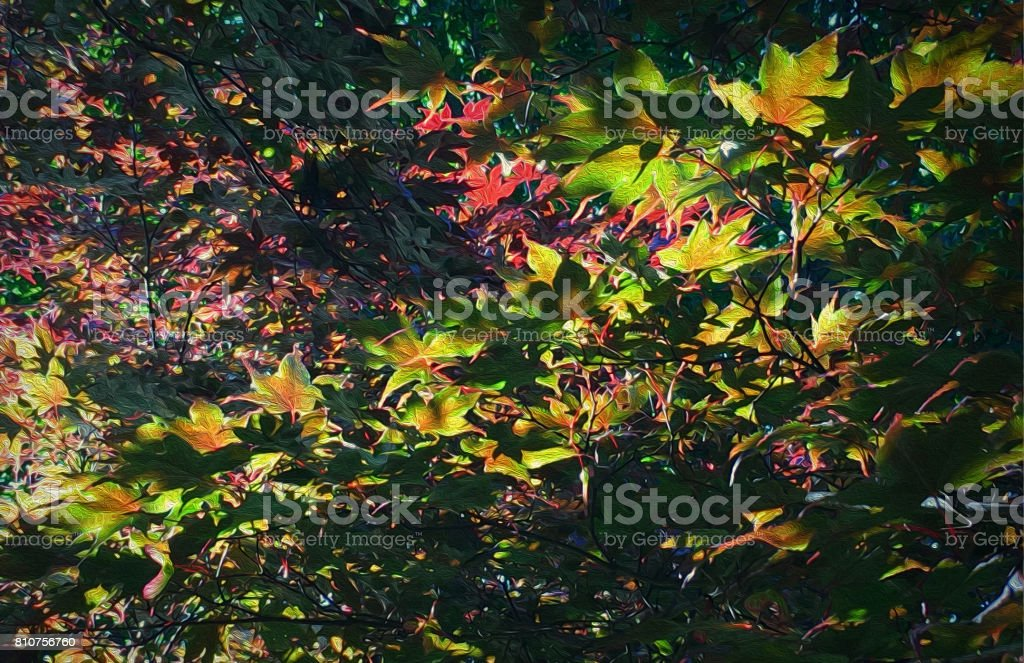 Inside A Japanese Maple Tree stock photo