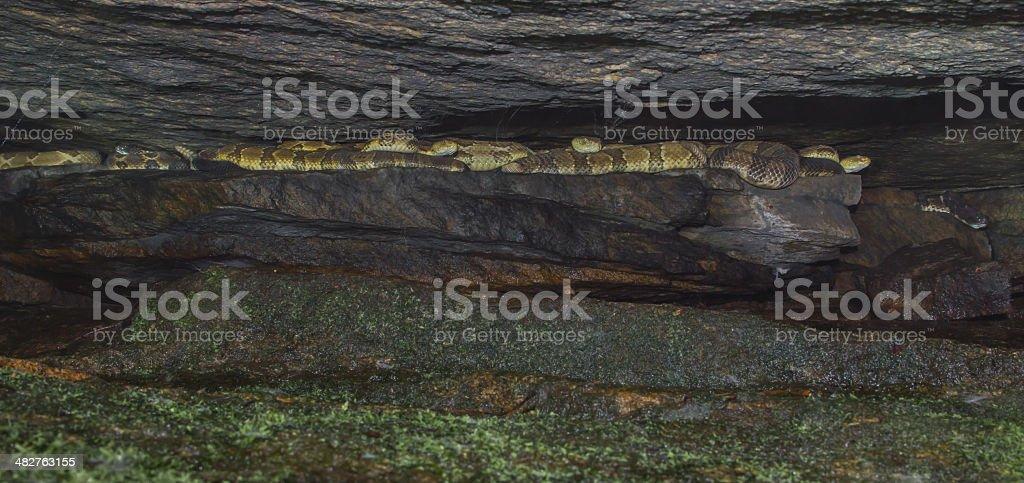 Inside a Rattlesnake Den stock photo
