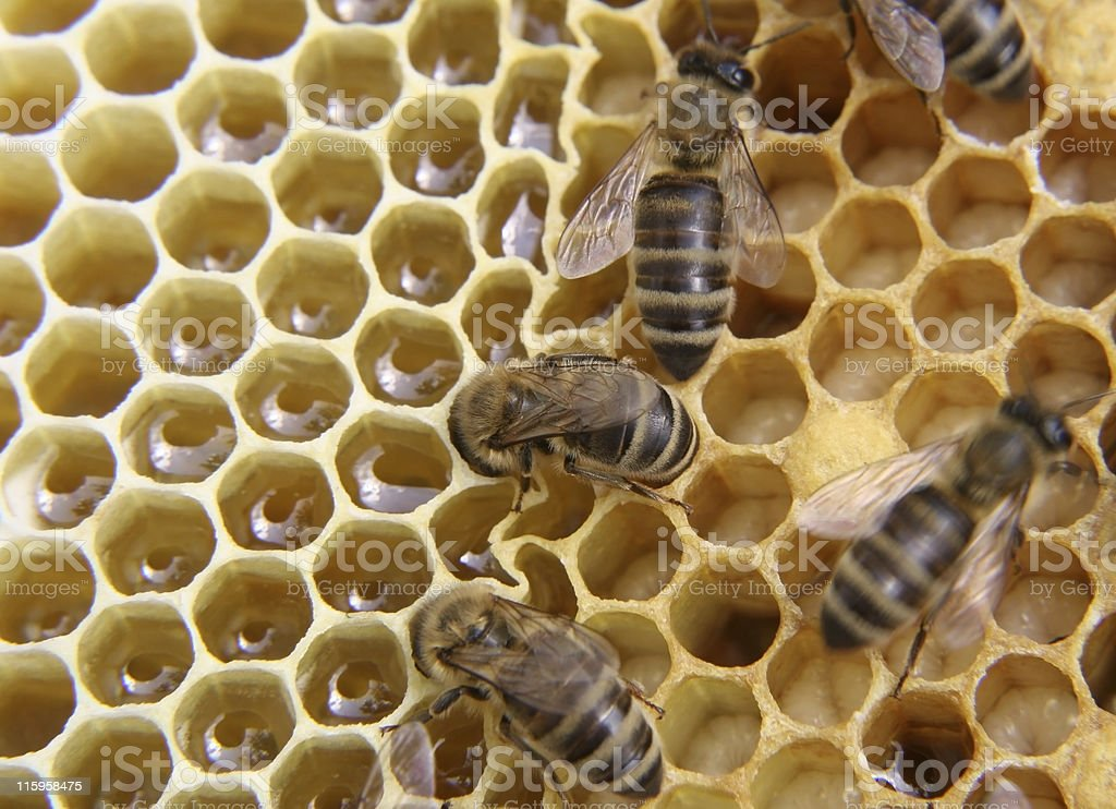 Inside beehive royalty-free stock photo