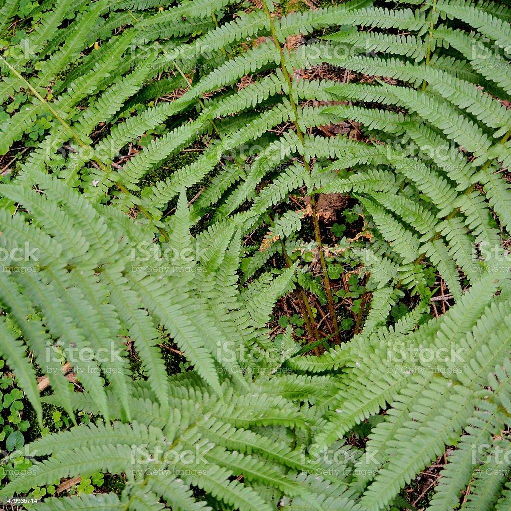 Inside fern stock photo