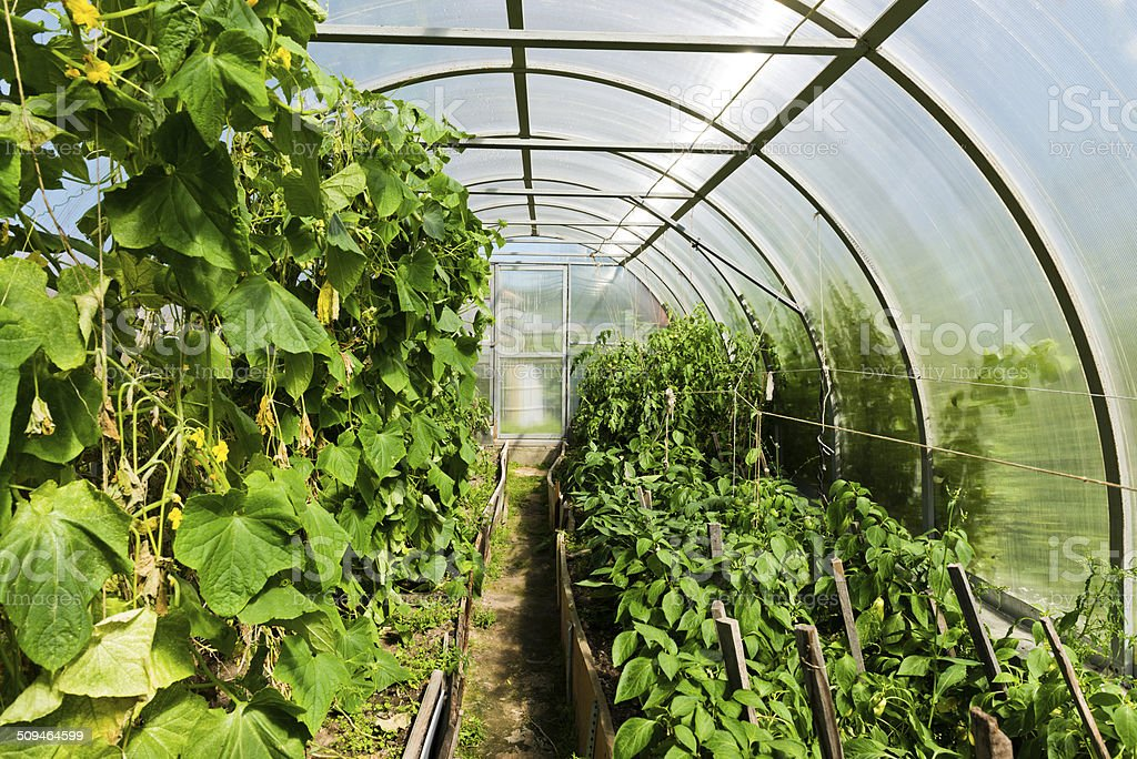 Inside plastic covered horticulture greenhouse stock photo