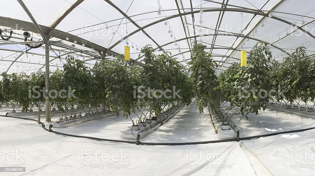 Inside the greenhouse royalty-free stock photo