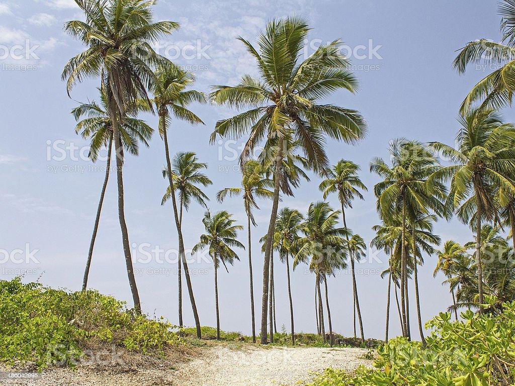 Inside the Island stock photo