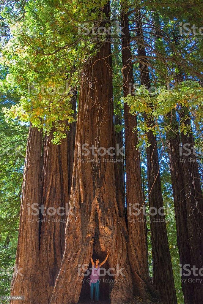 Inside the redwoods stock photo