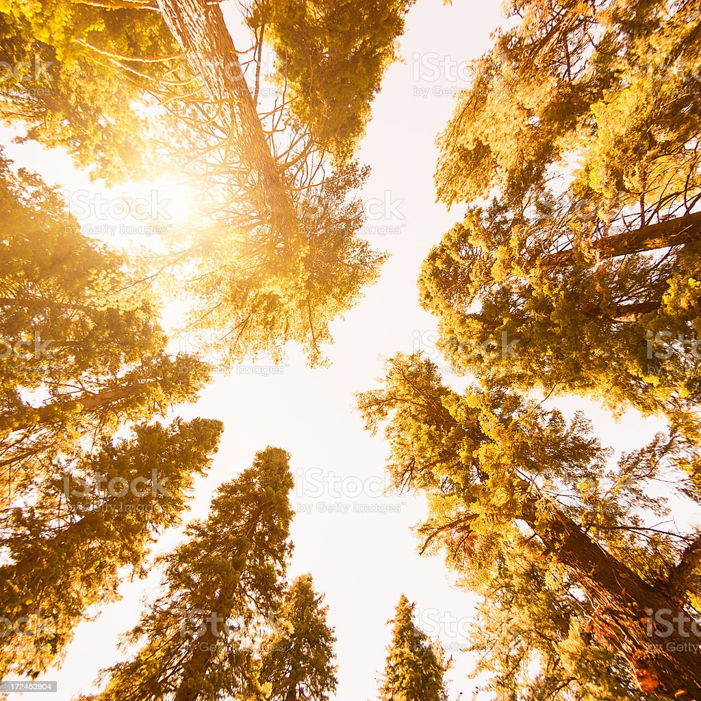 Inside the Sequoia National Park stock photo