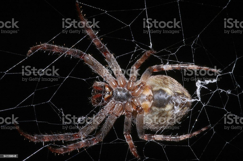 Insidiousness of a spider royalty-free stock photo