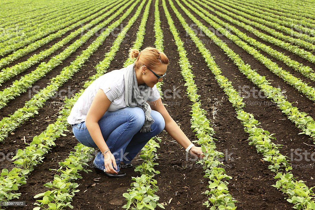 Inspecting crops. stock photo