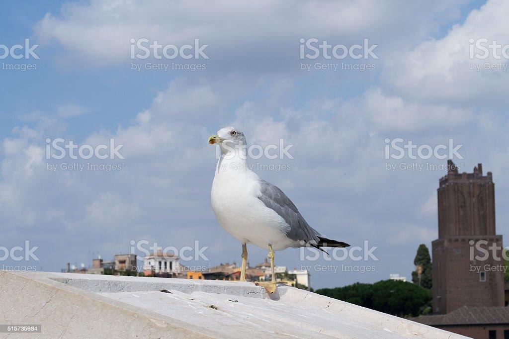 Inspirational image of european herring gull (Larus argentatus) stock photo