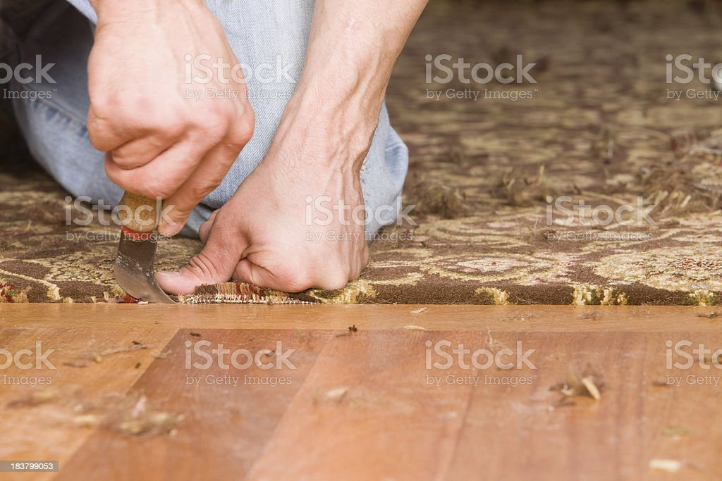 Installer Tucking Carpet next to Hardwood Floor stock photo