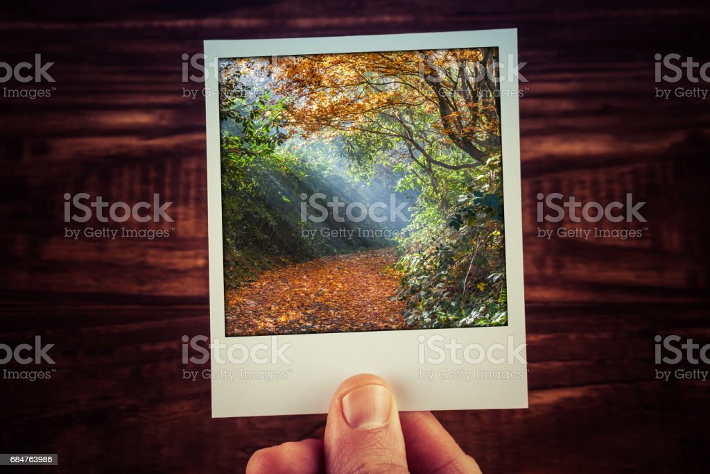 Instant postcard photograph of moody sunlight shining through Autumn foliage on empty footpath with copy space. Travel memories scrapbooking of good old times stock photo