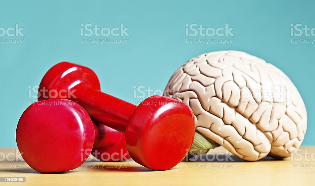Intellectual heavyweight! Model brain with barbells stock photo