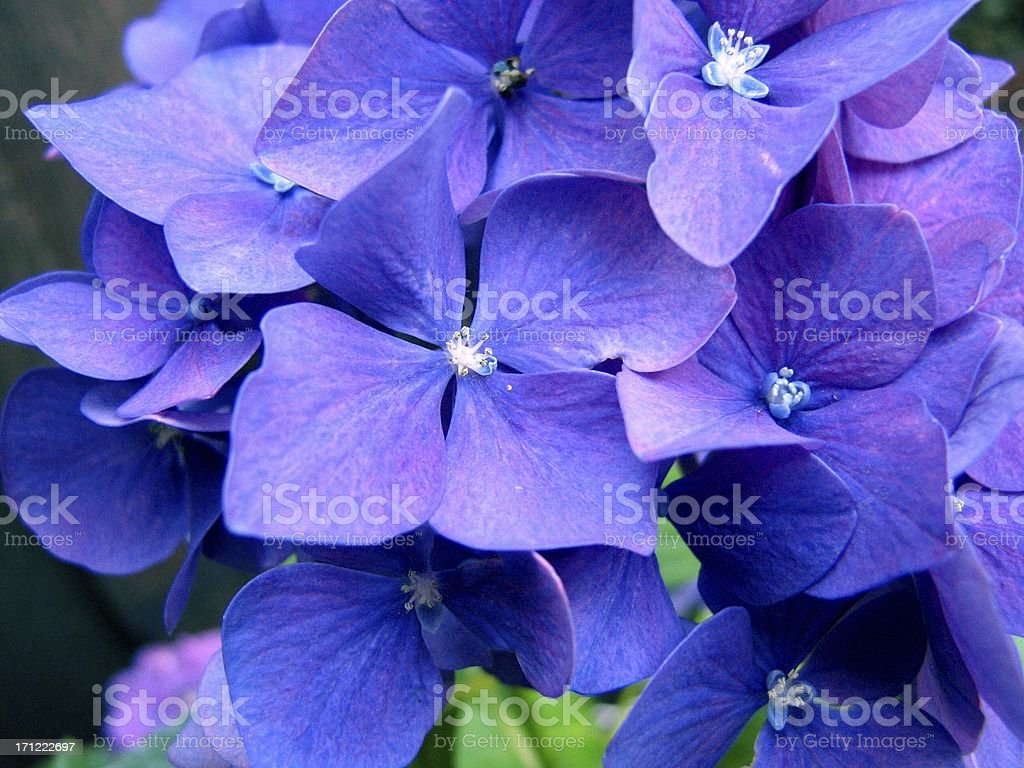 Intense Flowers royalty-free stock photo