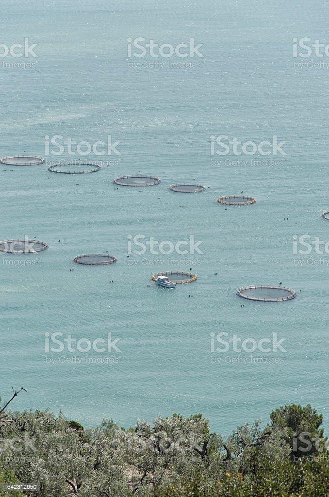 Intensive aquaculture in the Mediterranean sea stock photo