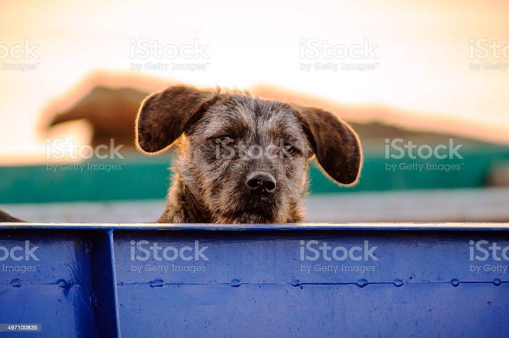 Interested Dog stock photo