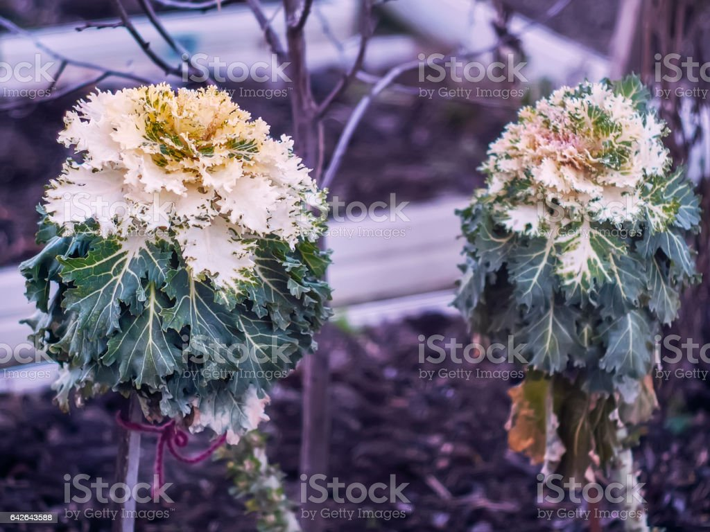 Interesting plants are growing in the garden stock photo