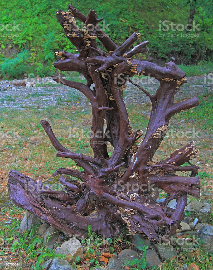 interesting tree with dry branches stock photo