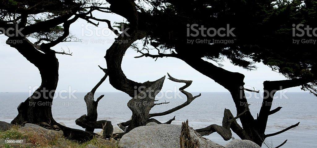 Interesting Trees at Pacific Ocean coast stock photo