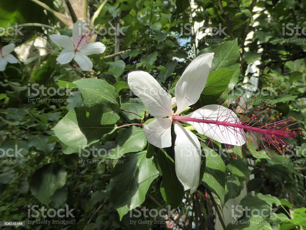 Interesting white flower stock photo