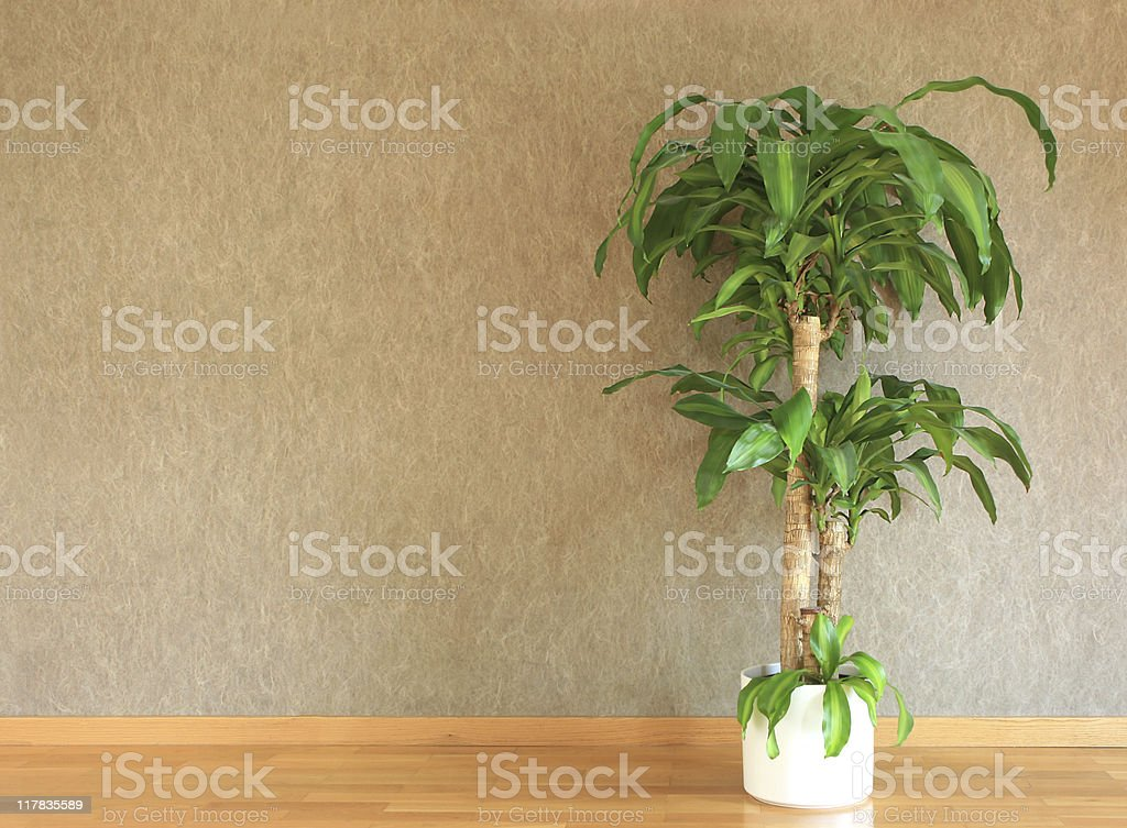 Interior - copy space royalty-free stock photo