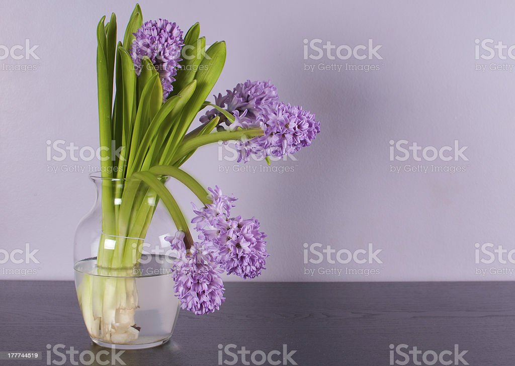 Interior design with lilac wall and purple flower stock photo