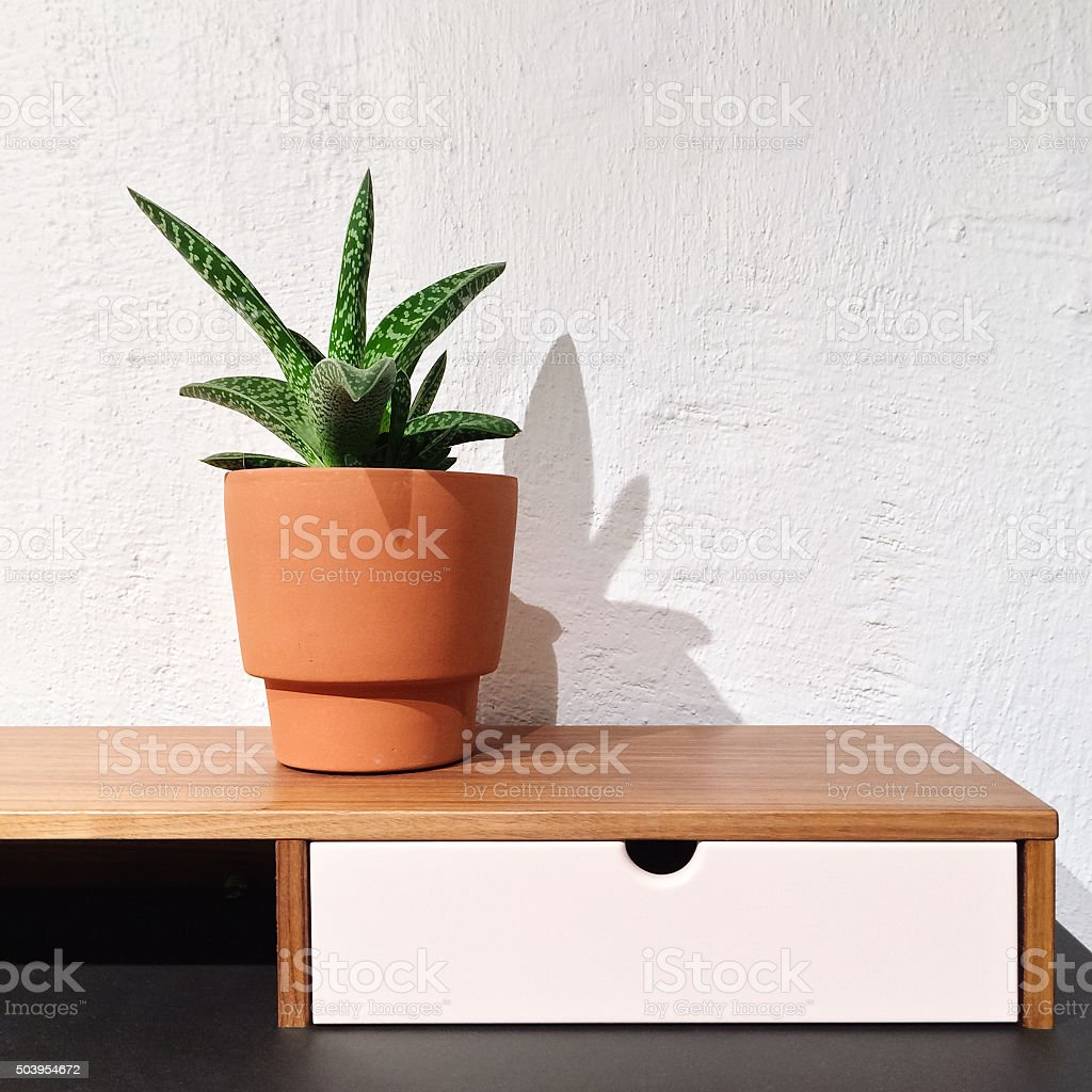 Interior with sansevieria plant in a clay pot stock photo
