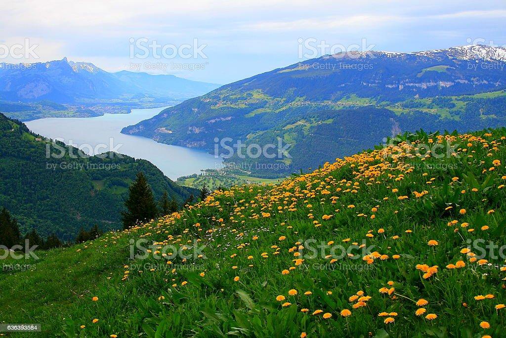 Interlaken, Thun Lake, Schynige Platte, Swiss alps, Bernese oberland stock photo