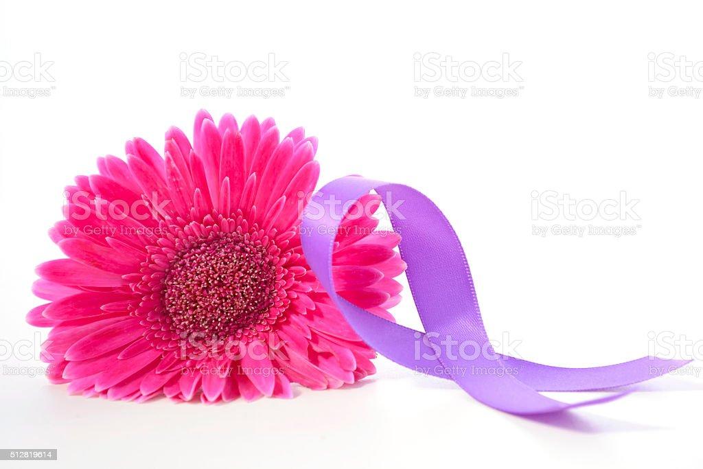 International Womens Day Pink Gerbera stock photo