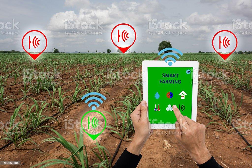 Internet of things(arigiculture concept),smart farming, smart ar stock photo