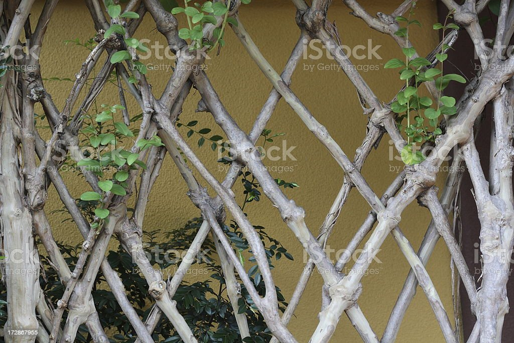 Intertwined branches royalty-free stock photo