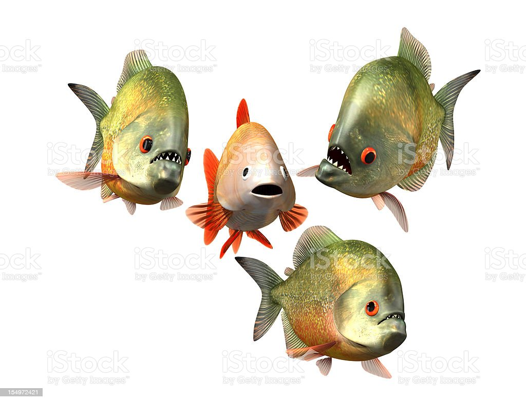 interview concept, goldfish and piranhas stock photo
