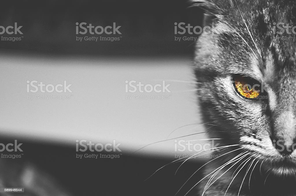 ' Intimidating ' stock photo