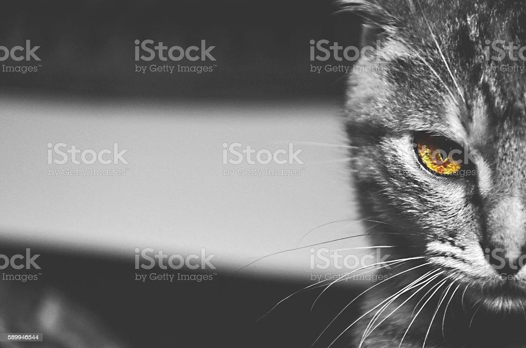 ' Intimidating ' stock photo