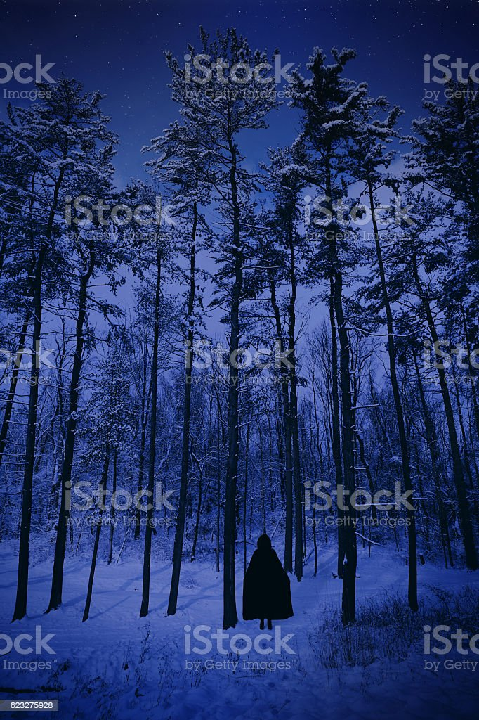 Into The Cold Dark Winter Forest stock photo