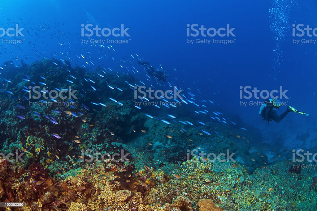 Into the Deep in St Lucia royalty-free stock photo